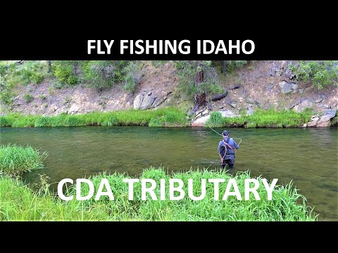 Fly Fishing Idaho CDA Tributary June Trailer for Amazon Prime Video