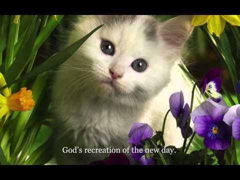 """Cat Stevens - """"Morning Has Broken"""" Lyrics on screen"""