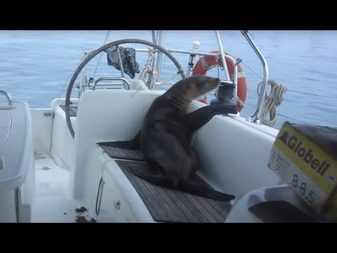 Sailing Adventure in the Galapagos Islands (Sailing La Vagabonde) Ep. 40