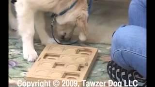 Teaching A Pet Dog Manners Class