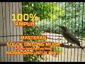 Suara Burung Sogok Ontong Muda Cocok Buat Masteran Di Jamin Semua Jenis Burung Madu Langsung Nyaut  Mp3 - Mp4 Download