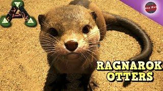 RAGNAROK OTTERS, TAMING SPREE | RAGNAROK | ARK SURVIVAL EVOLVED
