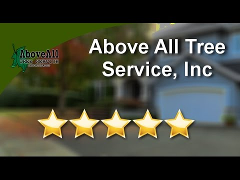 Above All Tree Service Inc Conyers Wonderful Five Star Review By Lauren W