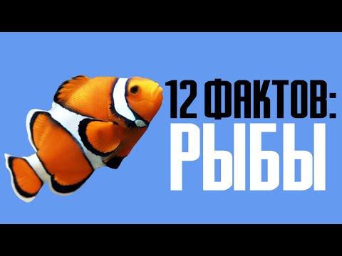 12 фактов о рыбах в целом и золотых рыбках в частности