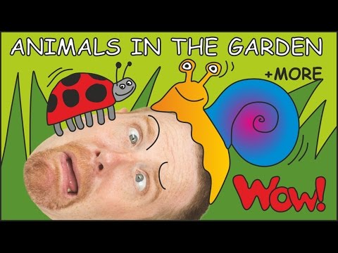 Animals in the Garden for Kids from Steve and Maggie | Learn English Speaking with Wow English TV