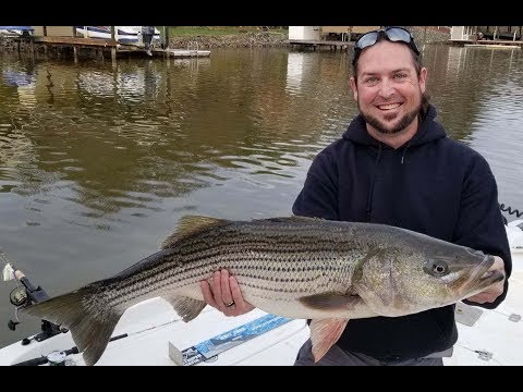 Episode 20 - Smith Mountain Lake, VA - Catching A Citation Striper W Bolt Fin Atics!