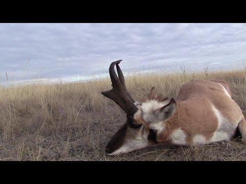 Antelope Hunting In Southern Alberta