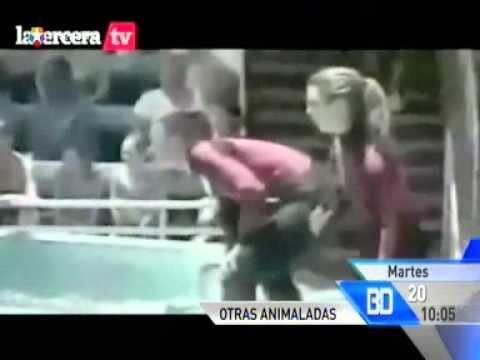 Se mete en el foso de los leones del zoo de Madrid
