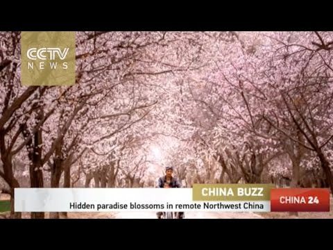Hidden paradise blossoms in remote Northwest China