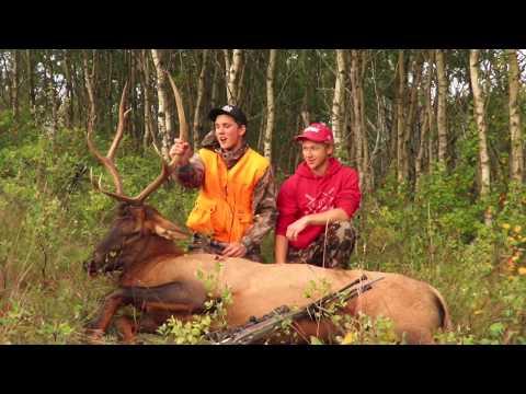 Saskatchewan Bull Elk