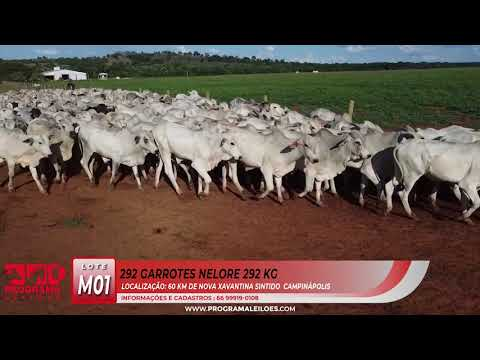 LOTE M01