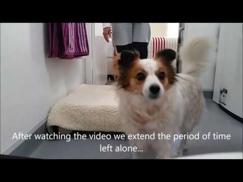 Separation anxiety, how to teach dogs to enjoy being left alone.