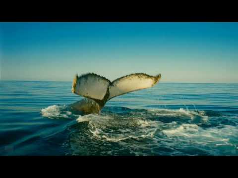 Download Wild Ocean (2008) (Trailer) (HD) (CE)