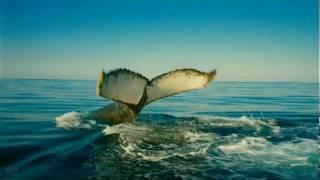 Wild Ocean (2008) (Trailer) (HD) (CE)