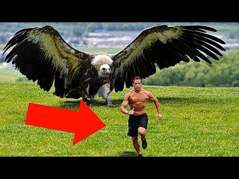 15 Самых Больших Птиц в Мире