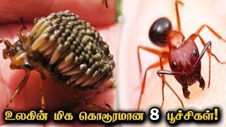 உலகின் மிக கொடூரமான 8 பூச்சிகள்! | 8 Most Dangerous Insects In The World | Crazy Talk