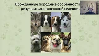 """«Ответственный подход к приобретению собаки"""". Вебинар Цигельницкого Е.Г."""
