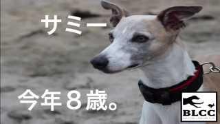 BLCC ルアーコーシング お知らせ 2015年2月8日ウィペット ミドル...