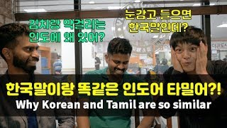 한국어와 똑닮은 언어가 인도에?! 김치랑 막걸리도 있다고!  (인도 타밀어) - 【세계문화탐구생활_1】