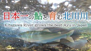 日本一の鮎を育む北川川 Kitagawa River grows the best ayu in Japan