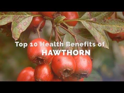 Top 10 Health Benefits of Hawthorn