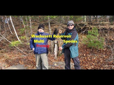 Wachusett Reservoir Multi Species Frenzy