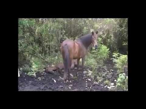 Race Horse Down....Illegal Slaughter Area