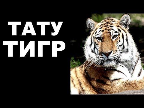 Мужская татуировка  Тату тигр
