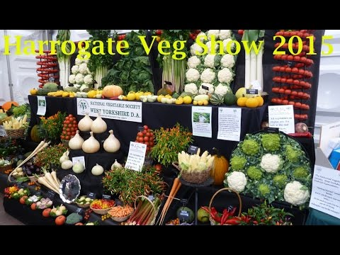 Allotment Diary : A look around Harrogate Exhibition Vegetable Show 2015