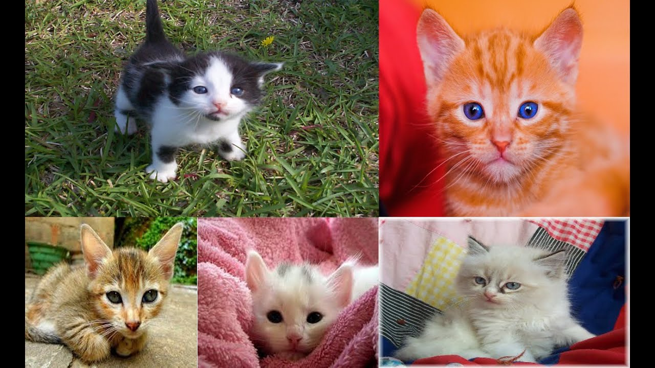 50 Cute Pictures Of Baby Kittens