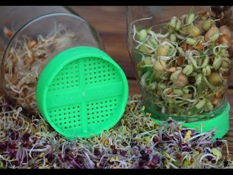 Growing Sprouts- Livingseeds Sprouting System