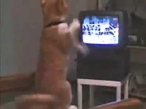 Скачать смотреть лучшее HD порно видео 720p