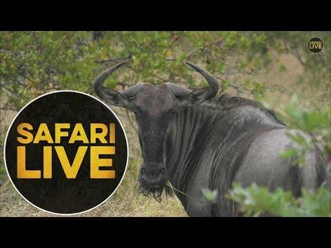 safariLIVE - Sunrise Safari - May 19, 2018