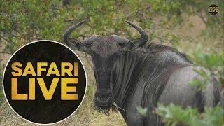 safariLIVE - Sunrise Safari - May, 19. 2018 thumbnail