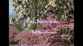 Ru Em Tung Ngon Xuan Nong -TCS -Minh Ngoc Piano -Vo Ta Han Hoa Am -Prunus -LienNhu