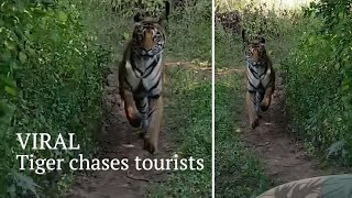 VIRAL   Video of tiger chasing tourists in Maharashtra goes viral