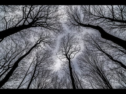 PHOTOGRAPHY TIPS AND TRICKS  - Creative Photography Composition With Bare Trees