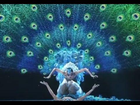Romantic peacock dance feat. Yang Liping