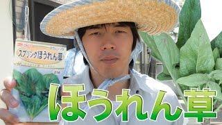 【家庭菜園】ほうれん草の種まき | ばあちゃんコラボ thumbnail