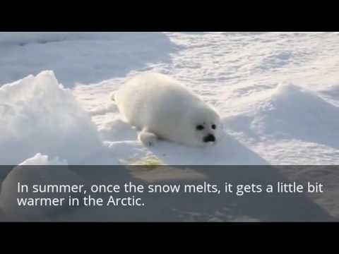 Facts about the Arctic climate for kids