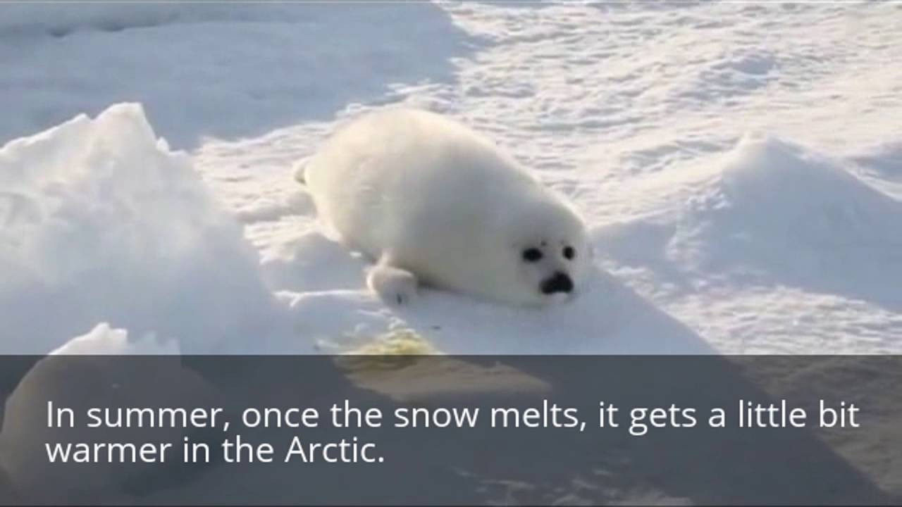 facts about the arctic climate for kids youtube