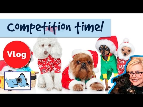 competition-time!-win-a-christmas-hamper-for-your-dog!-dog-christmas-present-instagram-comp!