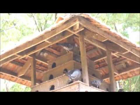 A traditional pigeon loft - pigoen house