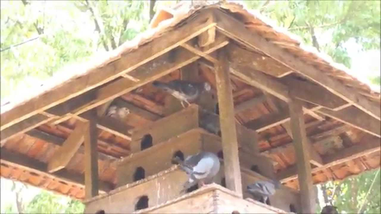 A Traditional Pigeon Loft Pigoen House Youtube