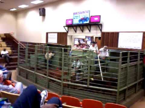 Emory Livestock Auction