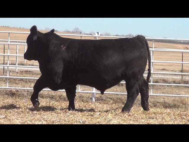 Express Ranches Lot 392