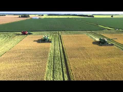 Arkansas Rice 2015
