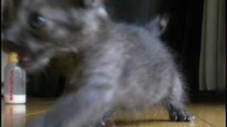 ジュリーの「勝手にしやがれ」でネコカラ作りました。