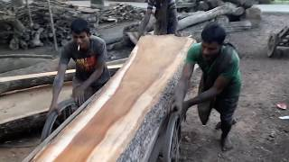 Very Wide and Long Tree Wood Cutting at Rural Village Bangladesh/BD Village Saw Mill Wood Cutting