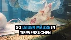 PETA USA undercover im Tierversuchslabor: Aufgeschnittene Schädel und ausgetretene Organe